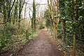 Woodland Walk - geograph.org.uk - 762600.jpg