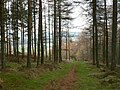 Woodland path - geograph.org.uk - 81028.jpg