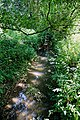 Woods Mill, Sussex Wildlife Trust, England - reflections in a stream.jpg