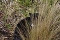 Wraxall 2012 MMB 34 Smudge.jpg