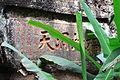 Wuyi Shan Fengjing Mingsheng Qu 2012.08.23 10-10-15.jpg