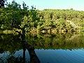 Yansımalar ve Ağaç... - panoramio.jpg