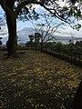 Yoshinocho, Kagoshima, Kagoshima Prefecture 892-0871, Japan - panoramio (4).jpg