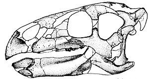Zalmoxes - Skull reconstruction of Z. robustus