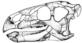Zalmoxes - Skull reconstruction of Z. robustus