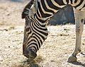 Zoo ZH DSC 3897 (4835732228).jpg