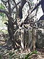 """""""arbre de la vie""""-the tree of life,.jpg"""