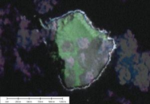 ʻAta - Image: 'Ata 150211247 3204891b 17 o