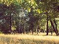Байрачные леса 3.jpg