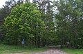 Вїзд в Мостівський лісовий заказник в кварталі 72 за ровами та шлагбаумом.jpg