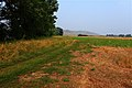 Дорога вдоль южного берега озера Лещево - panoramio.jpg