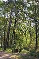 Дідове, Бобровицький район, кв. 90 Новоселицького лісництва.jpg
