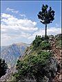 Каньон Тары - panoramio (4).jpg