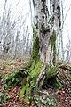 Лес на горе Ахун 03.JPG