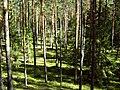 Лес - panoramio (13).jpg