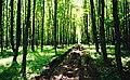 Лісовий масив Мохняк.jpg