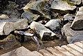 Непран Вячеслав, Пантелеймонова криниця, гідрологічна Пам'ятка природи, 44-233-5015, 49°28'01.1N 38°54'43.7E (8).jpg