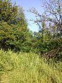 """Парк шума """"Гази Баба"""" 19.jpg"""