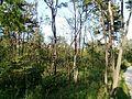 """Парк шума """"Гази Баба"""" 65.jpg"""