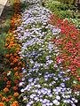 Растения в Седово 046.JPG