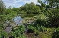 Скориківське болото, гідрологічний заказник.jpg