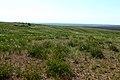 Степь в конце мая - panoramio.jpg
