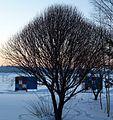 Усть-Качка. Пляж зимой - panoramio.jpg