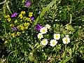 Цветы, растущие на склоне горы Шелудивой.jpg
