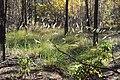 Чапля DSC 0390.jpg