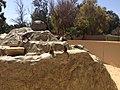 مجموعة قردة داخل حديقة حيوان طرابلس.jpg