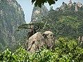 喜鹊登梅(仙人指路的另一视角) - Magpie on a Plum Tree(Immortal Pointing the Way from a Different Angle) - 2010.05 - panoramio.jpg
