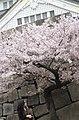 大阪城 - panoramio - kikosun.jpg