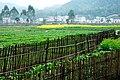 广州最美乡村—红山村 - panoramio (7).jpg
