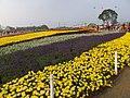 新社花毯節 Xinshe Flower Carpet Festival - panoramio.jpg