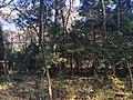 森の雰囲気 - panoramio.jpg