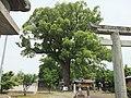 津江神社の樟 - panoramio.jpg