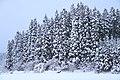 雪木の壁 - panoramio.jpg