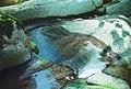 03-39-07, detail of stream - panoramio.jpg
