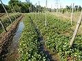 0581jfLandscapes Roads Vegetables Fields Binagbag Angat Bulacanfvf 06.JPG