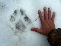 06 Elk Hunt (194).JPG