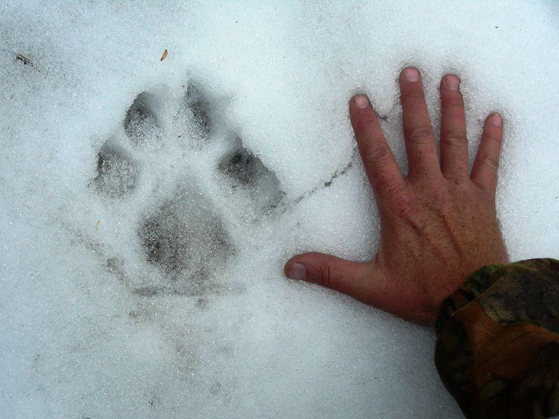 Soubor:06 Elk Hunt (194).JPG