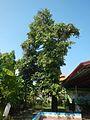 09293jfBalite Balayong City of Malolos Bulacan Landmarks Roadfvf 16.jpg