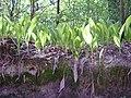 14.05.2006 - територія заказника Чернечий ліс (9).jpg