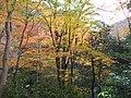 1 Minookōen, Minoo-shi, Ōsaka-fu 562-0002, Japan - panoramio (34).jpg