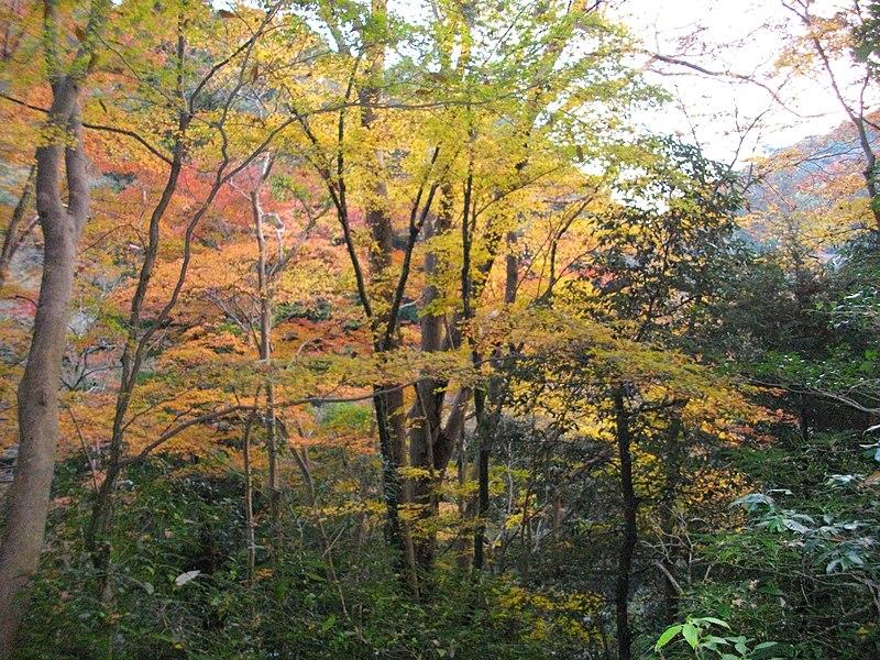 File:1 Minookōen, Minoo-shi, Ōsaka-fu 562-0002, Japan - panoramio (34).jpg