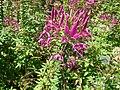 2008 07 Botanical Garden Meran 71380R0355.jpg