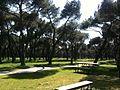 2010-04-10 Pinos - panoramio.jpg