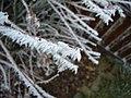 2011-01-31 Frost Berlin 04.jpg