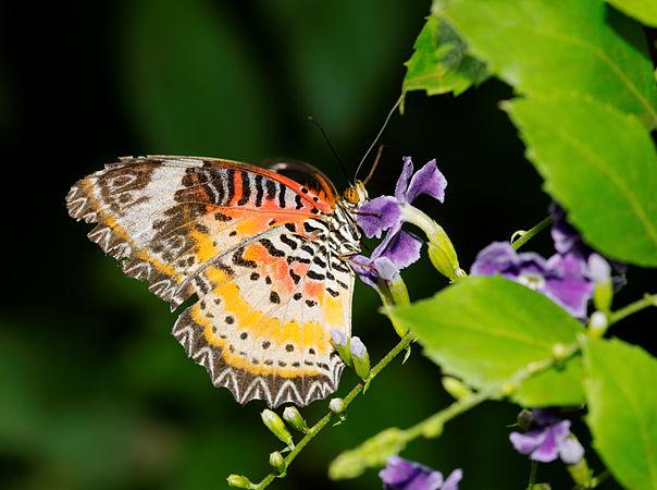 2011-08-08 16-01-35-papillon-hunawihr.jpg