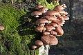 20141113 017 Well De Hamert Paddenstoel (15759298996).jpg